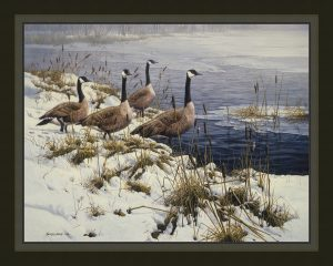 Among the Cattails - Canada Geese